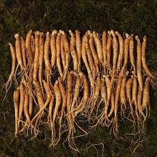 수삼 짠삼계 (80뿌리이상, 500g)